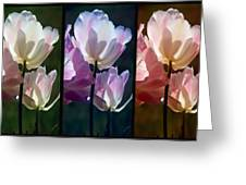 Coloured Tulips Greeting Card