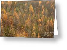 Colourful Autumn Leaves. Greeting Card