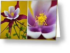 Colourful Colombine Greeting Card