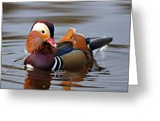 Colourful Duck Greeting Card