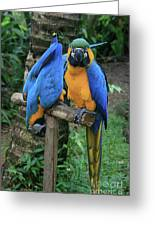 Colourful Macaw Pohakumoa Maui Hawaii Greeting Card