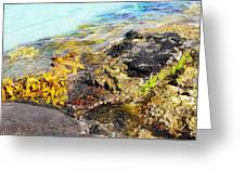 Colourful Sea Life - Fishers Point Greeting Card