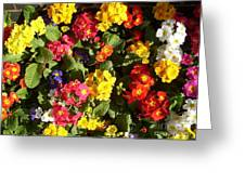 Colourful Spring Flowers Greeting Card