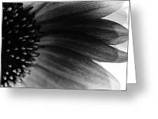Colourless Greeting Card