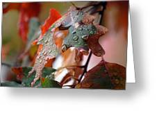 Colours Of Fall I Greeting Card
