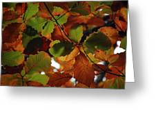 Colours Of Fall II Greeting Card