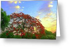 Colours Of Nature Greeting Card