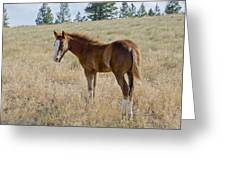 Colt 016 Greeting Card