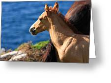 Colt By The Sea Greeting Card