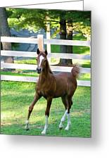 Colt Greeting Card