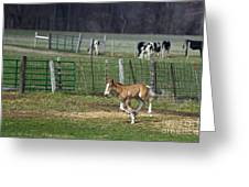 Colt Play With Hay Greeting Card