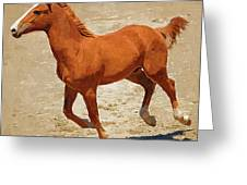 Colt Running Greeting Card