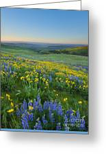 Columbia Hills Wildflower Dawn Greeting Card