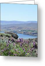 Columbia River Scenic Blooms #1 Greeting Card