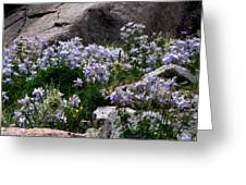 Columbine Abundance Greeting Card