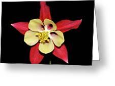 Columbine - Aquilegia - Mckana's Giant 002 Greeting Card