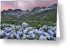 Columbine At America Basin Greeting Card