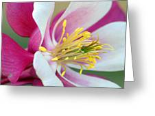 Columbine Flower 2 Greeting Card