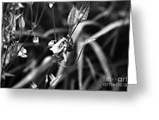 Columbine Flower 2 Black And White Greeting Card