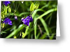 Columbine Flower 2 Greeting Card