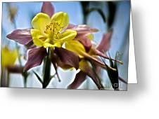 Columbine Flower Greeting Card