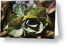 Columbine Foliage Greeting Card