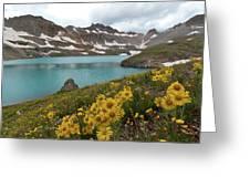 Columbine Lake And Alpine Sunflower Landscape Greeting Card