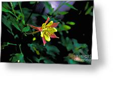 Columbine Outstanding Red Yellow  Greeting Card
