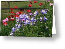 Columbines And Daisies Greeting Card
