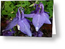 Columbines And Raindrops Greeting Card