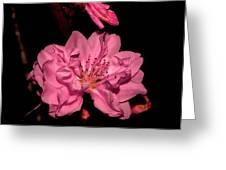 Columnar Ornamental Peach 001 Greeting Card