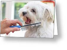 Combing Beards Of The White Dog Greeting Card