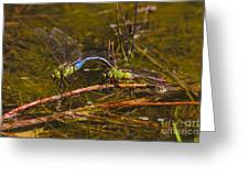 Come Along With Me Dragonflies Greeting Card