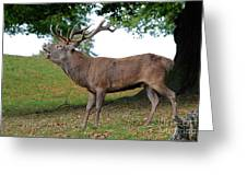 Come On Deer Greeting Card