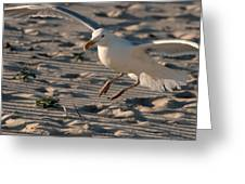 Coming In For A Landing - Jersey Shore Greeting Card