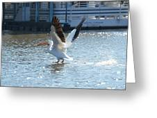 Coming In For A Landing Greeting Card