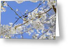 Coming Of Spring Greeting Card
