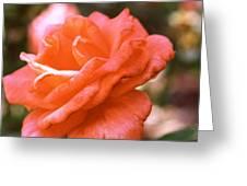 Coming Up Roses Greeting Card