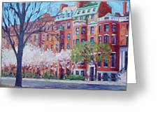 Comm Ave Magnolias Greeting Card