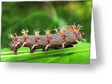 Comma Caterpillar Greeting Card