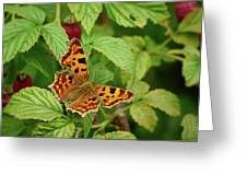 Comma Greeting Card