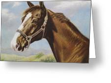 Commission Chestnut Horse Greeting Card by Dorothy Coatsworth