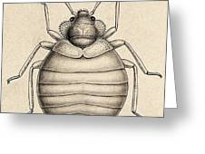 Common Bedbug, Cimex Lectularius Greeting Card