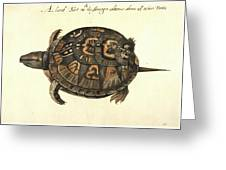 Common Box Tortoise, 1585 Greeting Card