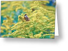 Common Buckeye Butterfly Hides In The Goldenrod Greeting Card