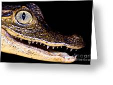 Common Caiman Greeting Card