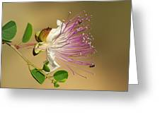 Common Caper Greeting Card