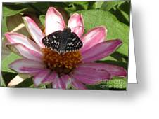Common Checker Butterfly Greeting Card