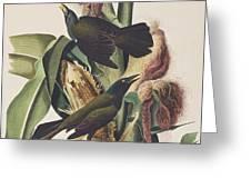 Common Crow Greeting Card