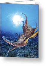 Common Cuttlefish Greeting Card